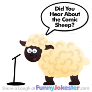 Bad Joke - Funny Sheep
