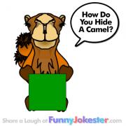 Funny Camel Joke
