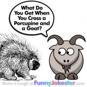 Funny Porcupine Joke