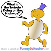 Funny Tortoise Joke