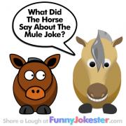 Mule Jokes, Farm Jokes