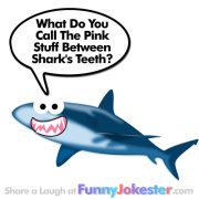 New! Shark Joke for Kids