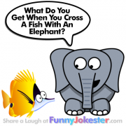 Funny Elephant Joke