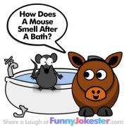 Funny Mouse Joke