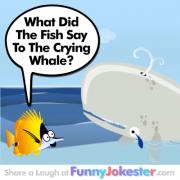 Funny Whale Joke