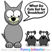 New Funny Cat Joke