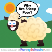 Funny Sheep Joke