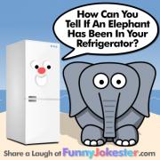 Elephant Joke