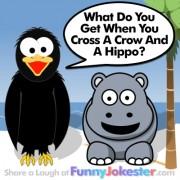 Funny Hippo Joke