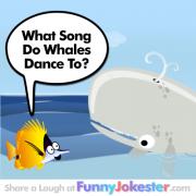 Whale of A Joke